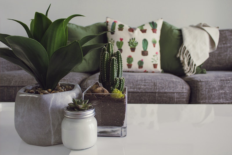 Decorate-rental-property-with-house-plants